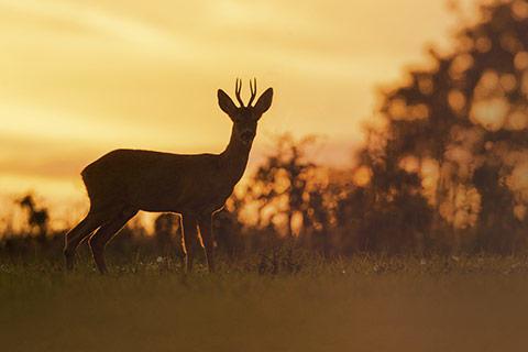 Entfernungsmesser Jagd Mit Beleuchtung : Besonders gut in der dÄmmerung entfernungsmesser jagd