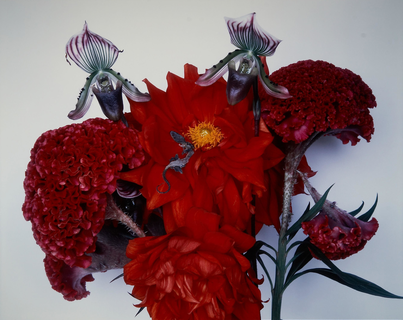 Araki / Flowers and Jamorinsky